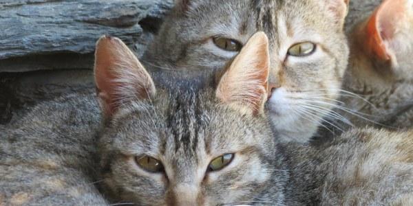 Campanya de control de la colònia de gats